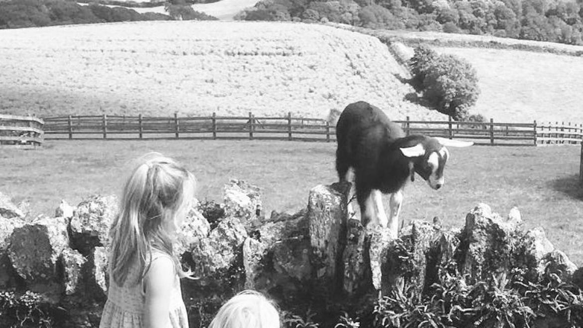 Farm stay holidays with children in the UK