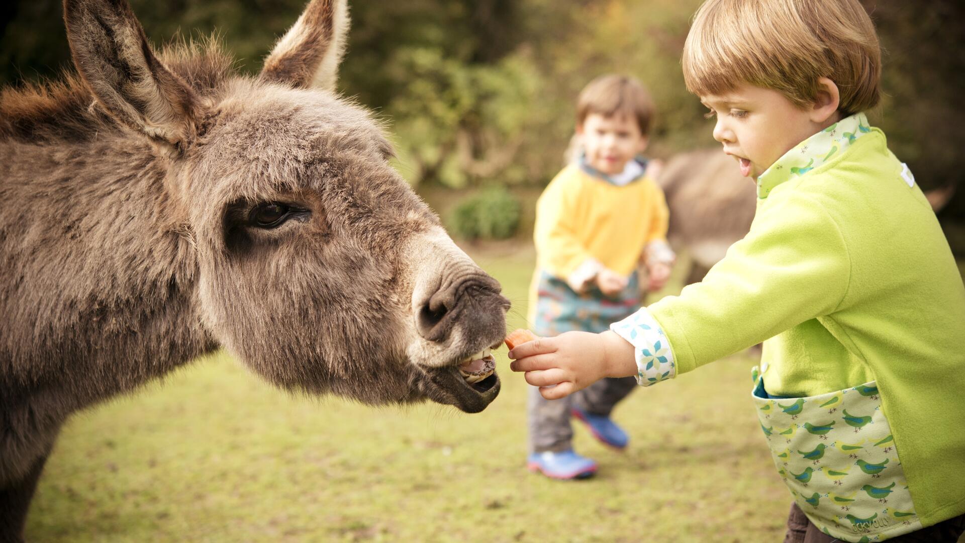 Child-friendly farm stay in South Devon